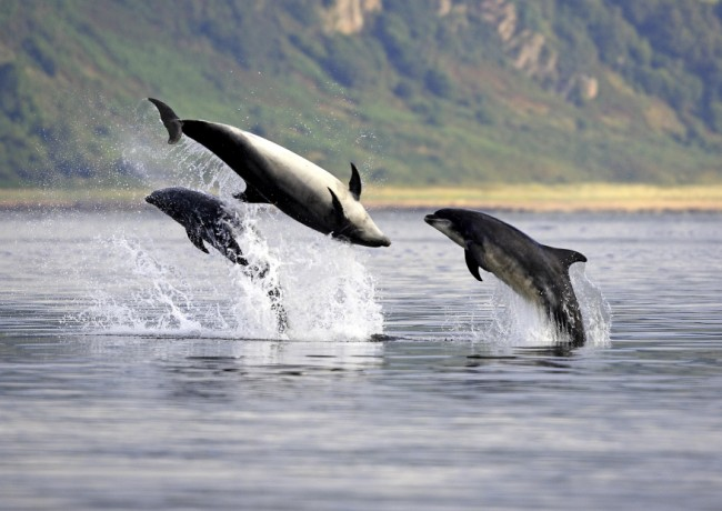 Biologist Nathan Merchant says underwater noise levels have been increasing over recent decades, disrupting crucial activities for dolphins.