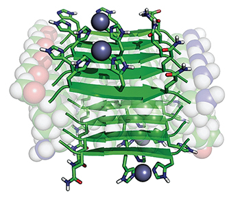 A rendering of a catalytic amyloid-forming peptide, with zinc ions shown as gray spheres