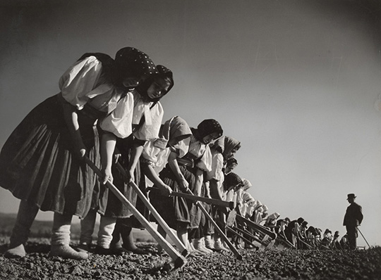 Margaret Bourke-White, [Women working in the field, Kostolná, Czechoslovakia], 1938 Courtesy of Special Collections Research Center, Syracuse University Libraries Photo © Estate of Margaret Bourke-White/Licensed by VAGA, New York, NY