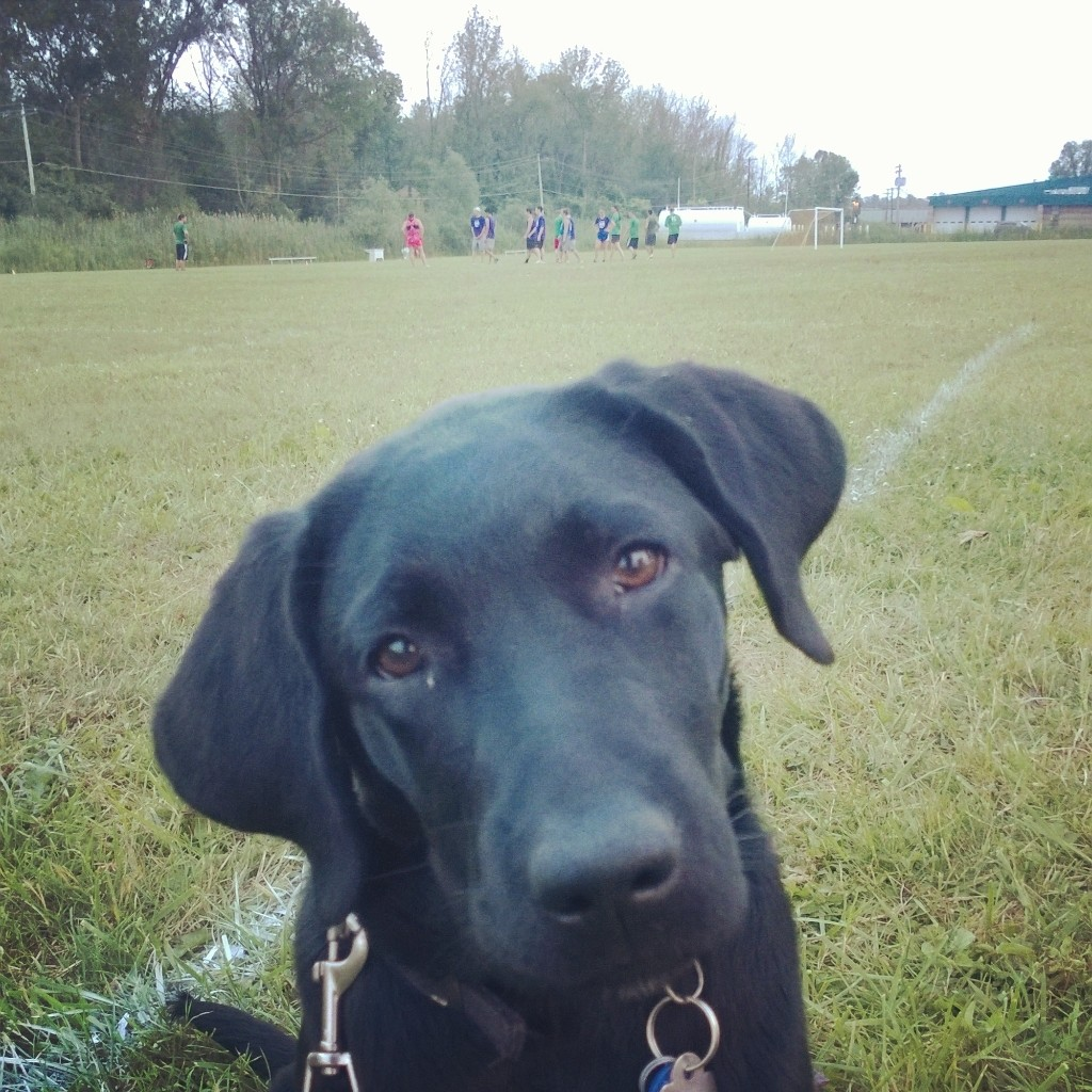 Christine Erwin, of the Bursar's Office, snapped this photo of her 4-month-old puppy, Scout, at her son's Frisbee game in East Syracuse in July. The pup is a Guiding Eyes for the Blind puppy-in-training.
