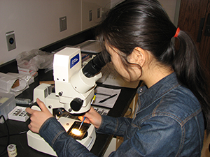 Xiaoli Zhou in the lab
