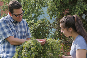 Jason Fridley works in the Climate Change Garden with biology undergraduate Paige Armas.