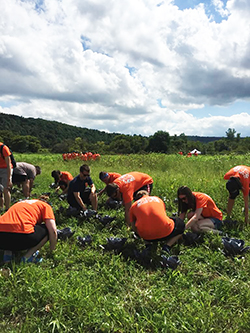 Incoming College of Law students harvest produce on a local farm as part of their orientation.