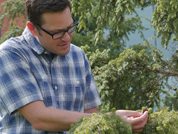Jason Fridley works in the University's Climate Change Garden.