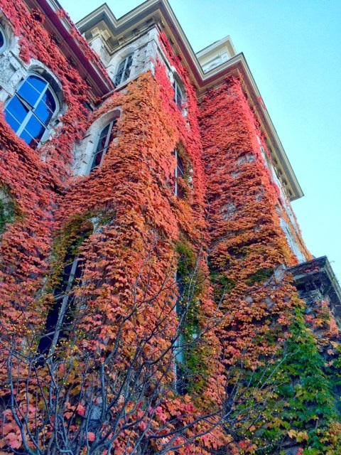 Hall of Languages-Fall 2015