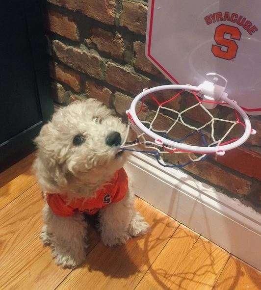 Dog with hoop