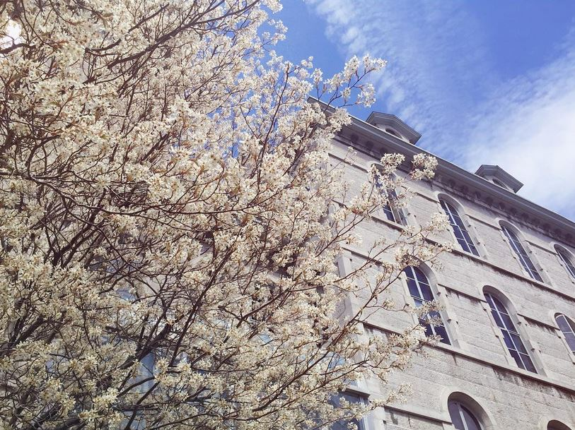 Flowering tree in front of building