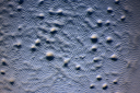 M. xanthus bacterium