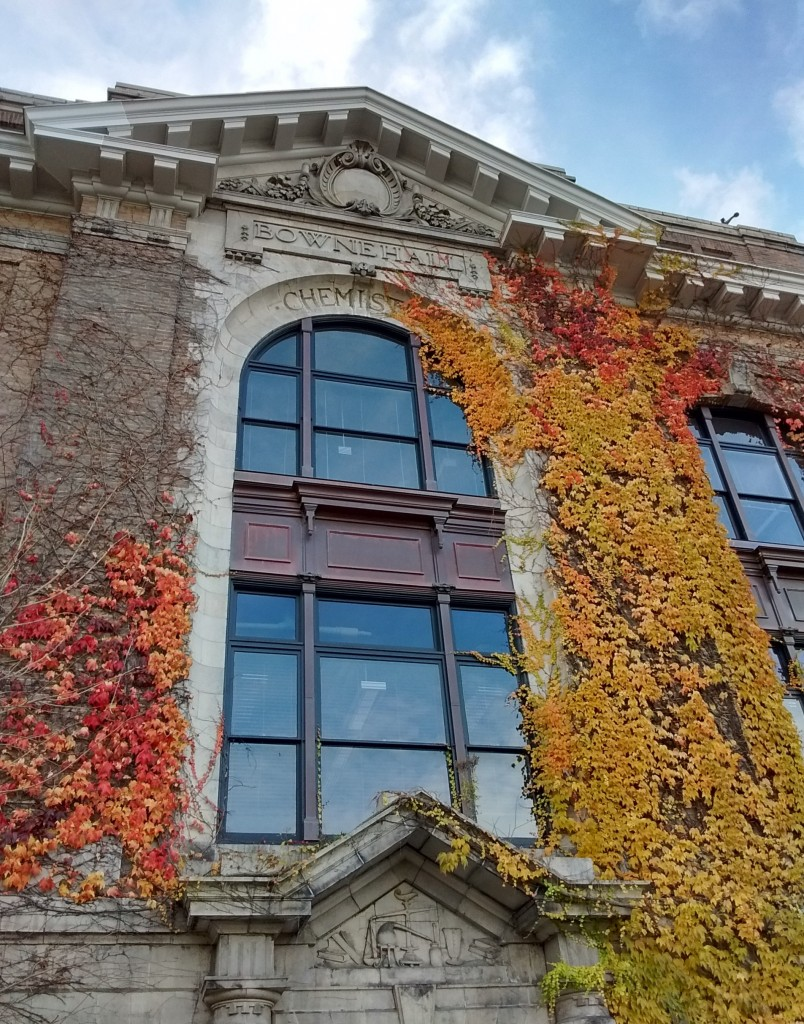 building with leaves