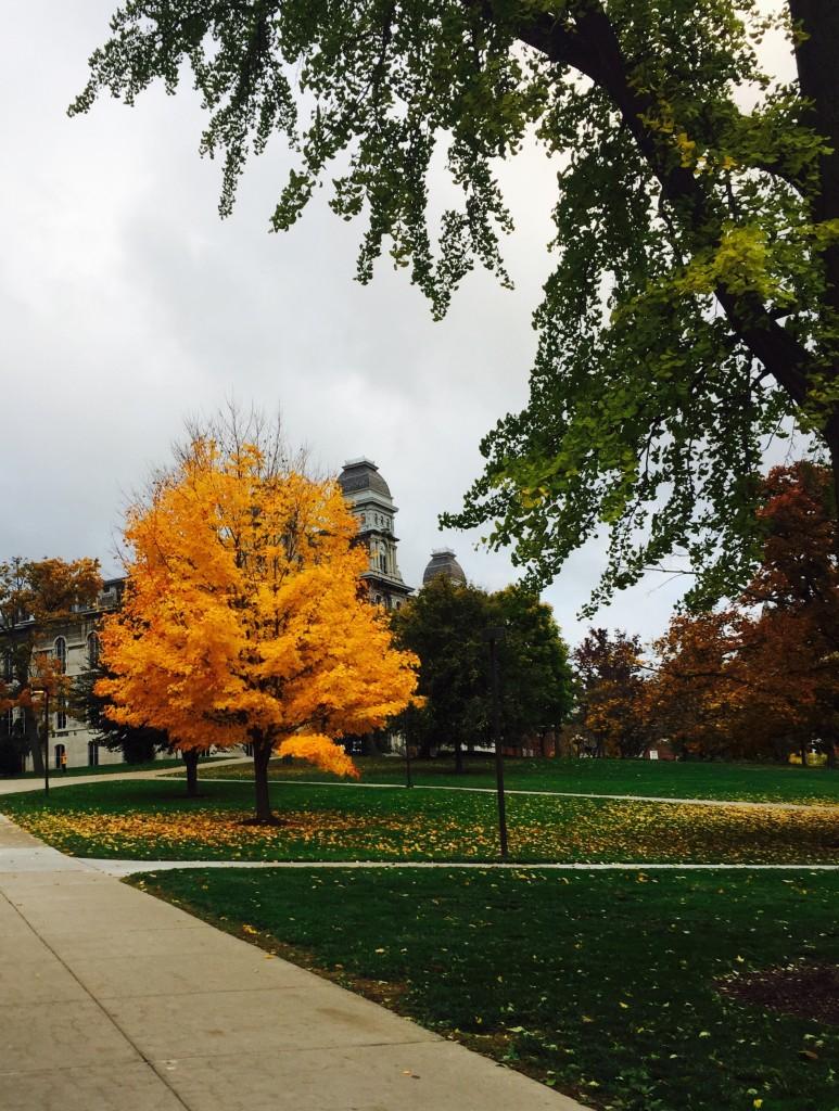 campus-tree1