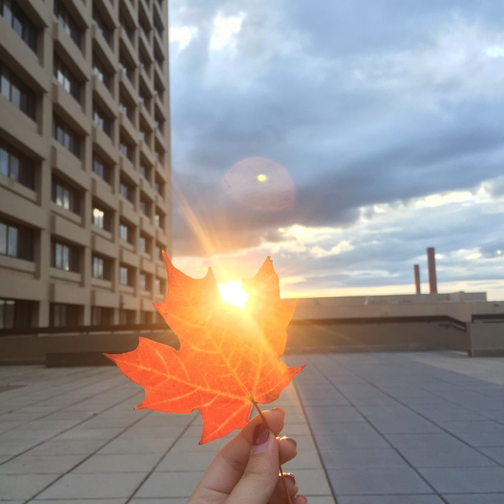 leaf in front of sunset