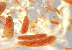 disease cells