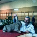 "A scene from Keren Shavit's ""Rabbits."""