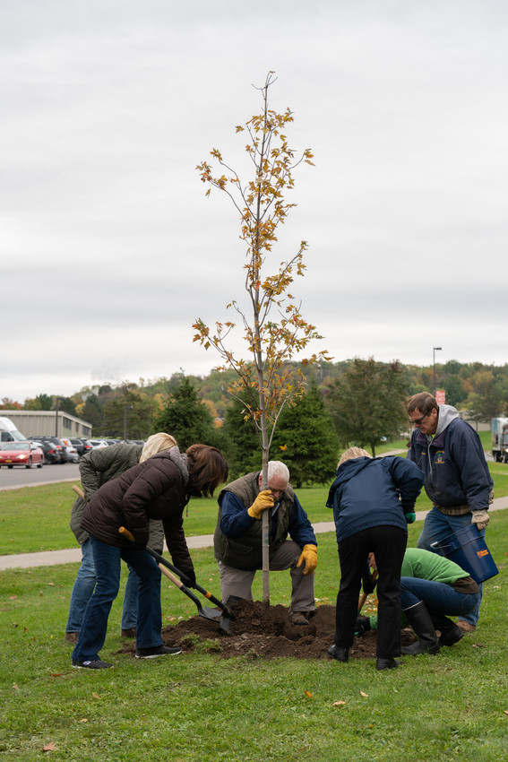Volunteers planting a tree.