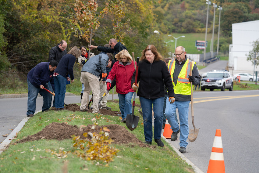 Volunteers plant trees along Skytop Road.