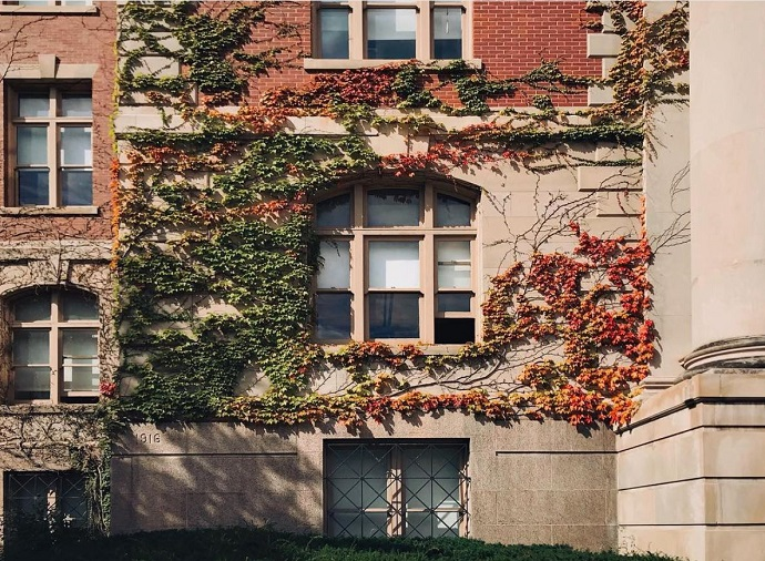 leaves on a building