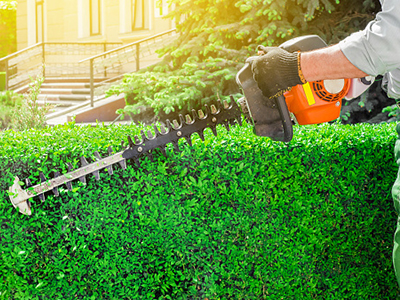 Electric pruner trimming a hedge