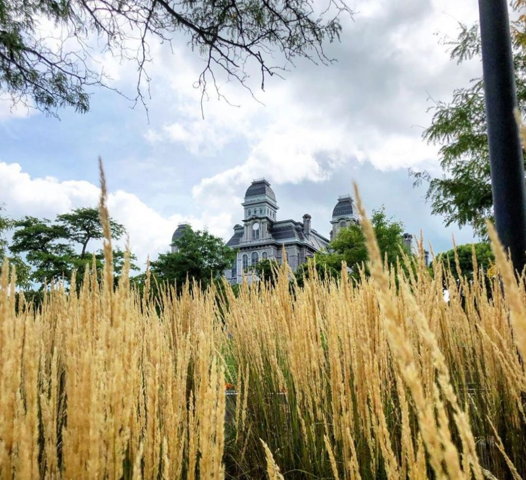 tall grass in front of Hall of Languages