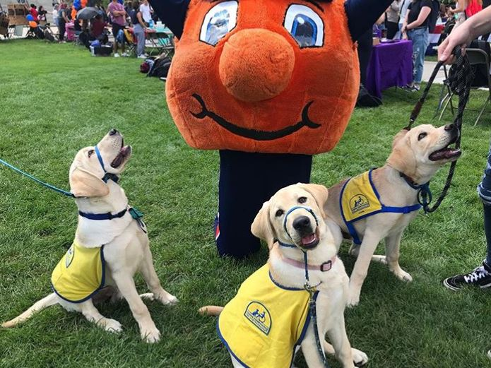 Otto the Orange with three puppies in vests