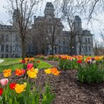 flowers planted in front of Hall of Languages