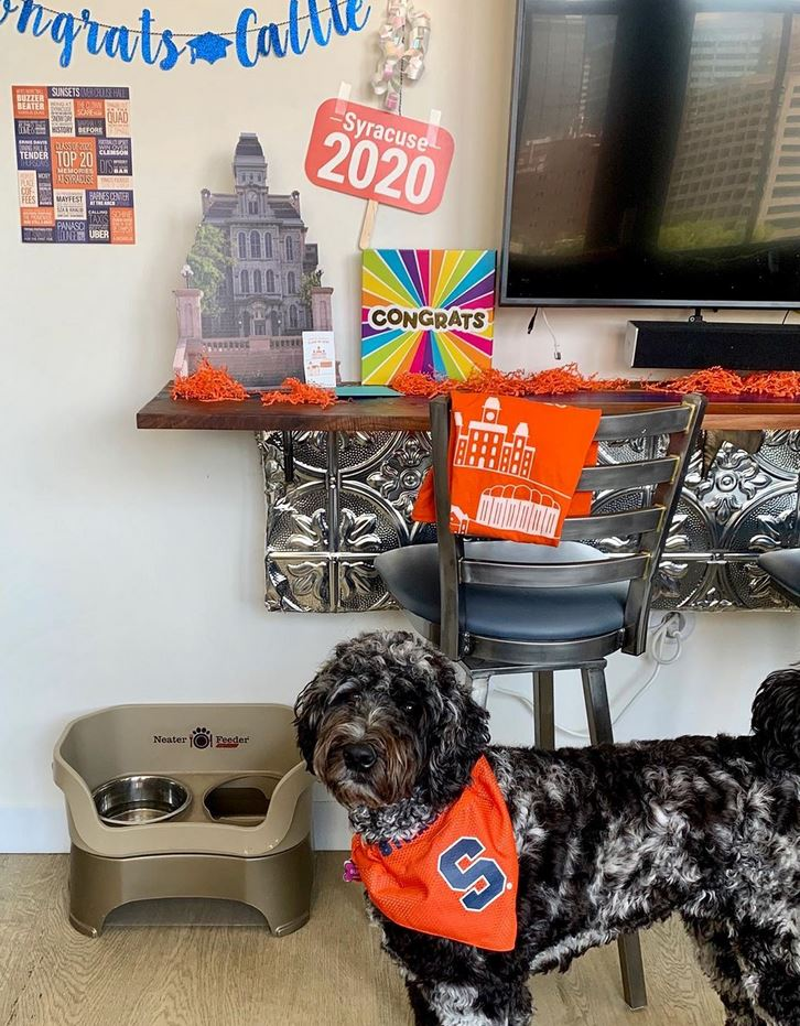 dog standing next to Syracuse University decorations