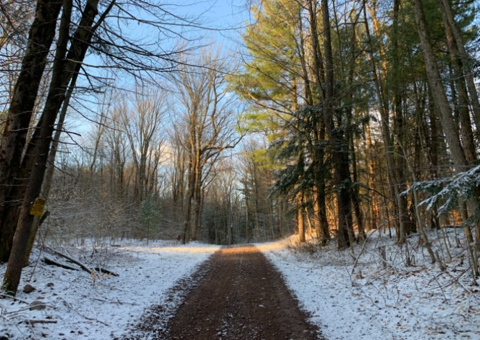 light snow along a tree-lined path in rural New York