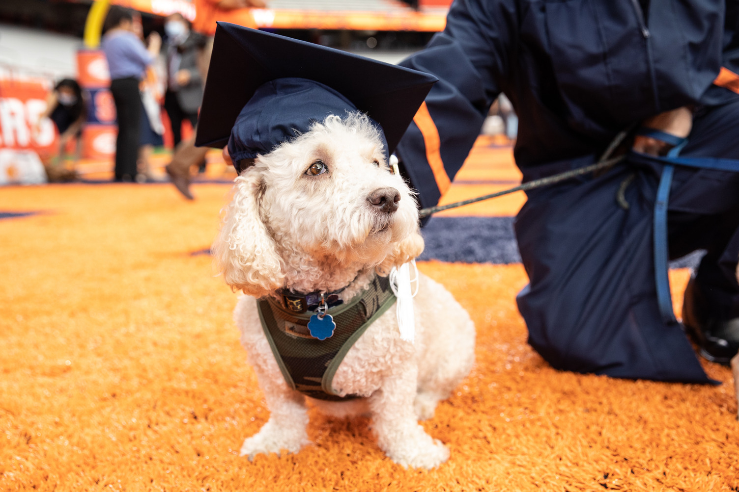 a dog wearing a cap at Commencement 2020